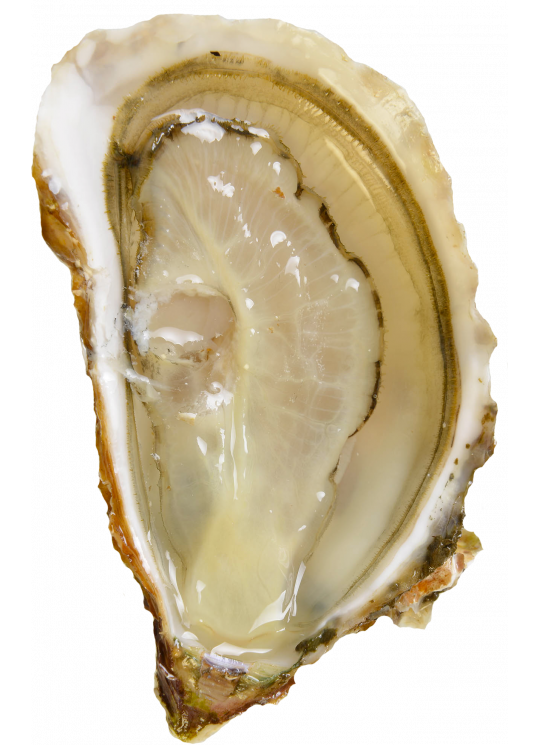 Organic Bouzigues oysters