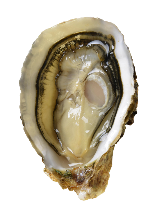 Camargue Oysters