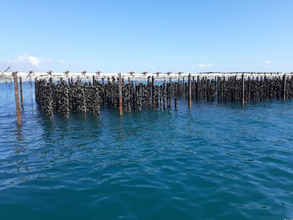 Huîtres de Camargue