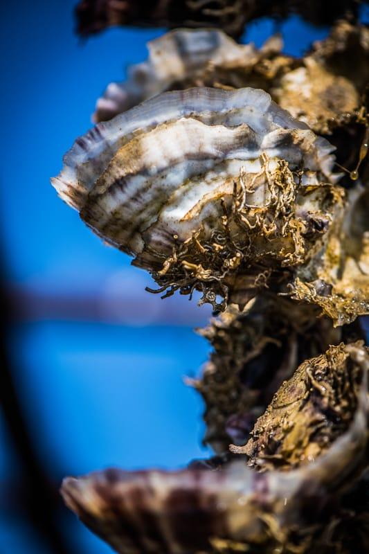 Huîtres de Bouzigues Bio